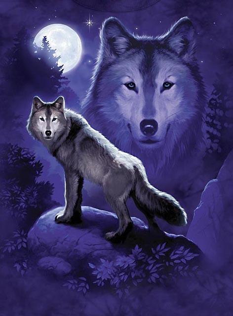 Despre lupi şi noapte
