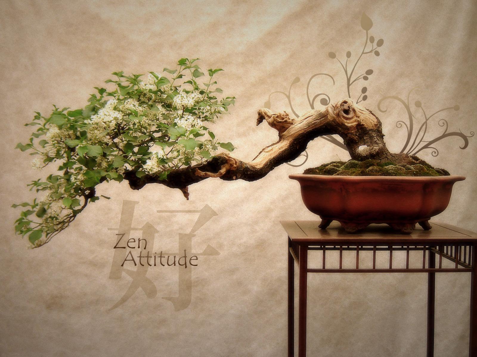 Zen și viața după moarte